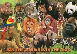 12 (1Dozen) Postcard of All the Animals in the Zoo